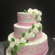 Soft Pink And White Rose